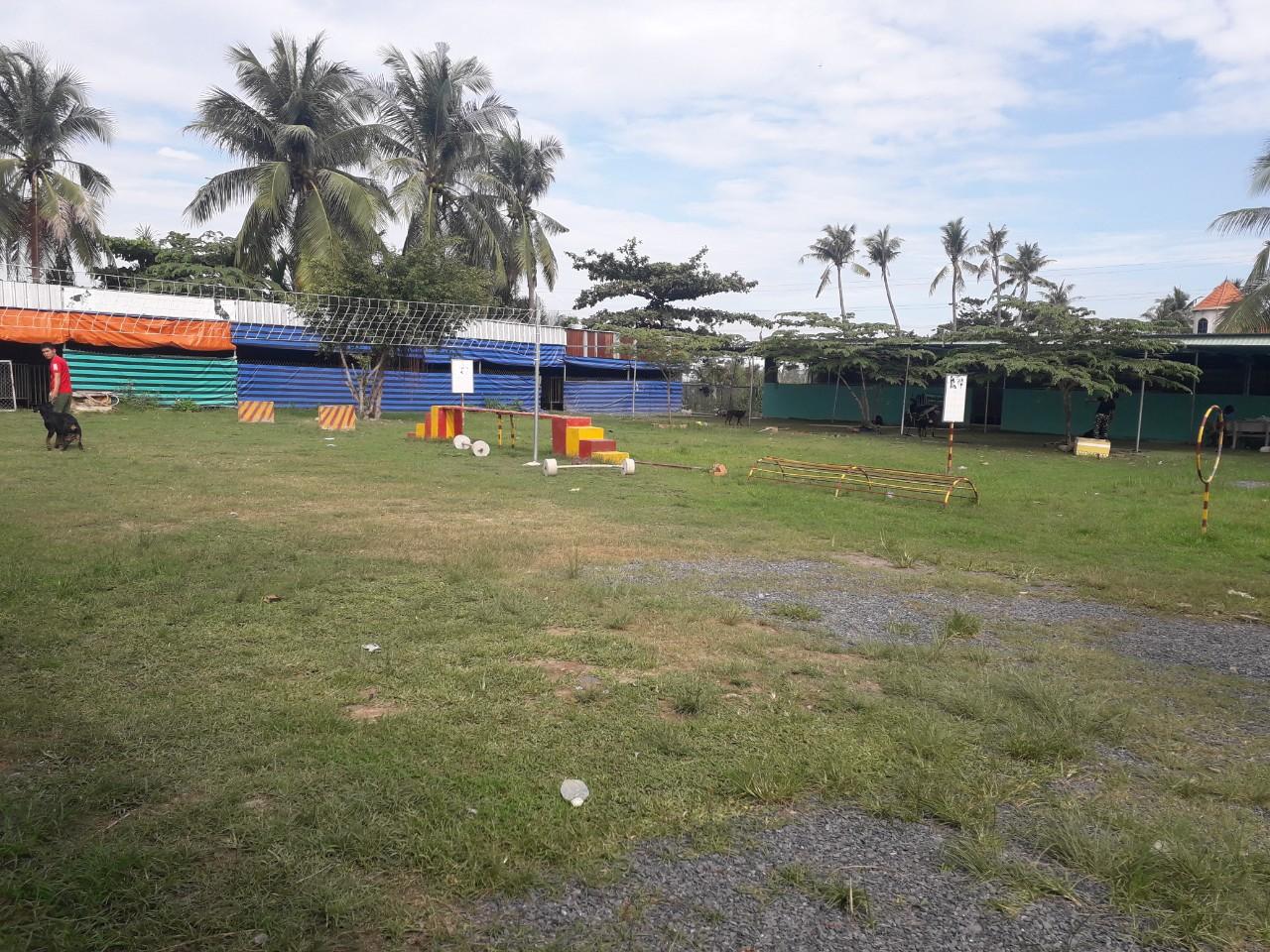 Dịch vụ nhận chăm sóc chó ngày tết uy tín tại Tphcm, Bình Dương
