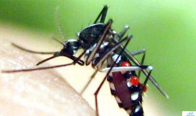 Bộ y tế lên tiếng về đại dịch vi rút Zika