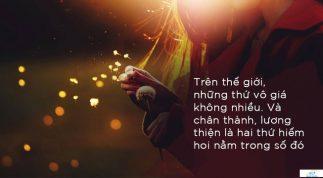 Đi lấy dây cột cái cây bị gió quật đổ, người đàn ông không ngờ được hưởng lợi cả đời