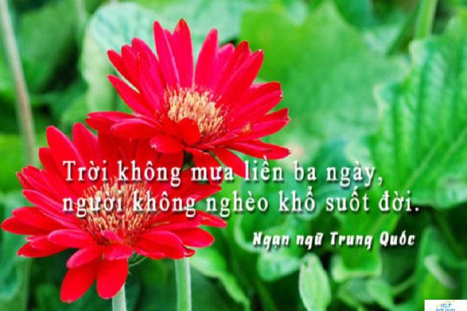 met-moi-vi-tien-va-cuoc-song-bon-chen-cang-doc-cang-tham