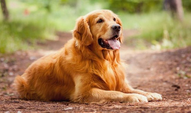 Dog training exercises are more advanced and nature of habit