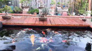 Top 10 địa chỉ thiết kế hồ cá koi uy tín chuyên nghiệp nhất tại Tphcm