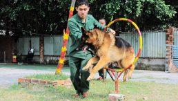 Trường huấn luyện chó cảnh khuyển tại Tphcm Trung Đức